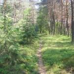 Cieślin - Ścieżka leśna (1)