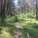 Cieślin - Ścieżka leśna (2)