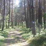 Cieślin - Droga leśna z niebieskim szlakiem rowerowym
