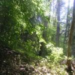 Cieślin - Las na Górze Golczowskiej