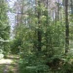Cieślin - Leśna droga do Borku