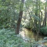 Cieślin - Rzeka Tarnówka płynąca od strony Bydlina