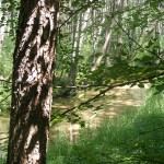 Cieślin - Rzeka Tarnówka w rejonie Pustek