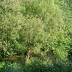Cieślin - Rzeka Tarnówka w rejonie sklepu spożywczego