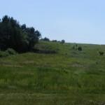 Cieślin - Ugory, niegdyś pola na Górze Golczowskiej