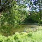 Cieslin - Małe jezioro przy ulicy Zdrojowej za stawem