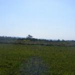 Cieślin - Pola na Podgórzu (jeszcze w latach 90-tych rosło tu zboże i ziemniaki)