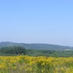 Cieślin - Widok na Góry Bydlińskie z pól na Podgórzu