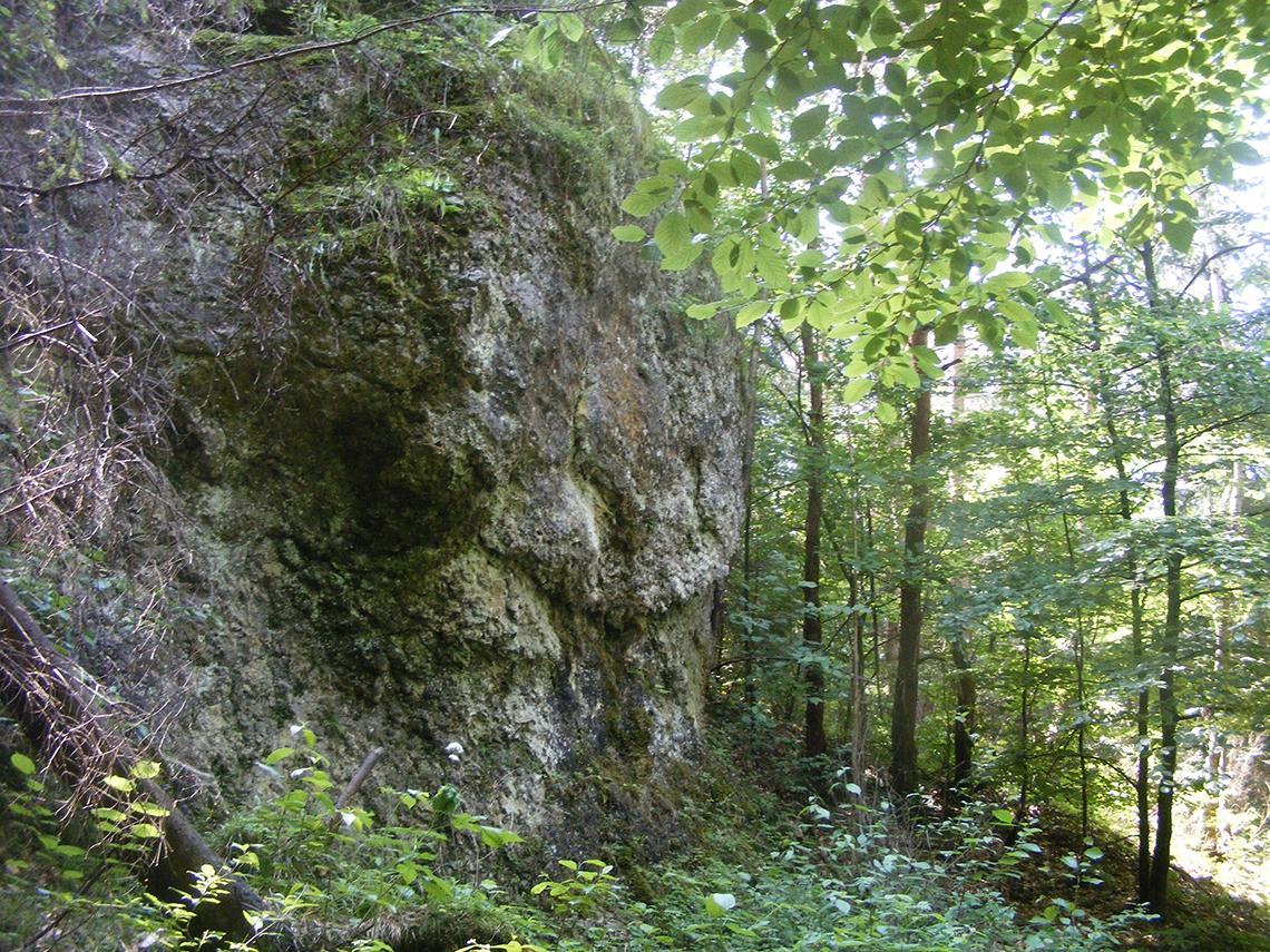 Wapienna skała w rejonie drogi w kierunku Borku.